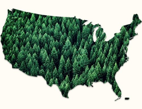 How many trees could provide enough forest land to store 205 billion metric tons of carbon?